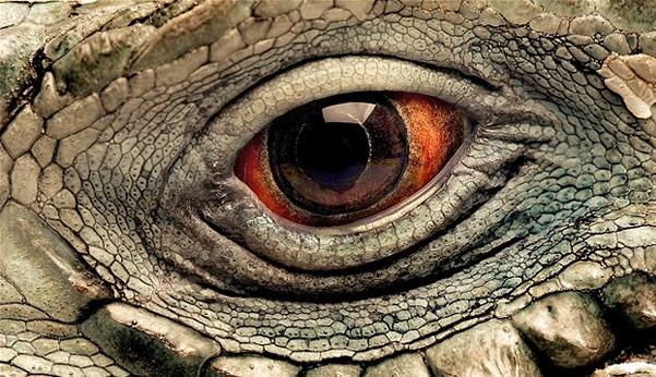 Doğanın gözünün içine bakın!