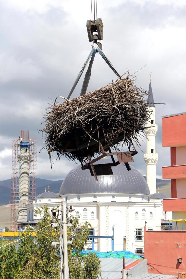 Ardahan'da Bina Yıkılmadan Önce Çatısındaki Leylek Yuvası Taşındı
