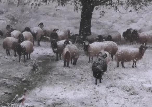 Ardahan kar hapsinde 270 köy yolu kardan kapandı