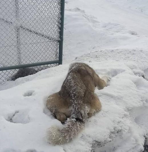 Ardahan'da Soğuktan Köpek Öldü