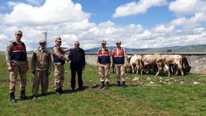 Ardahan'da Çalınan Büyükbaş Hayvanlari İçin Jadarma Tarafından Başarılı Operasyon
