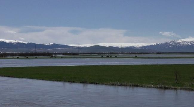 Ardahan'da Kura Nehir Taştı, Ova Sular Altında Kaldı