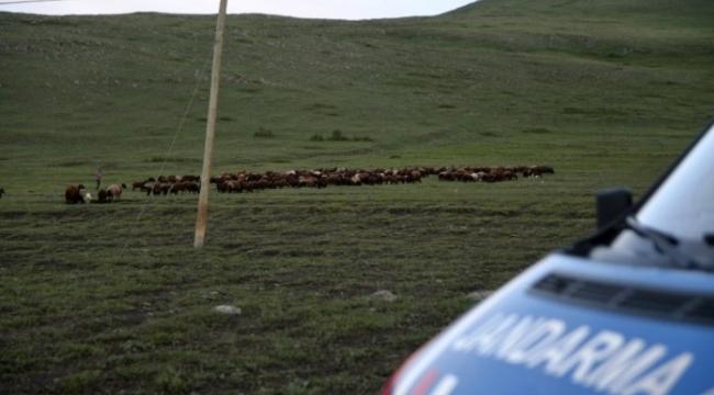 Ardahan'da 800 küçük baş hayvan yakalandı