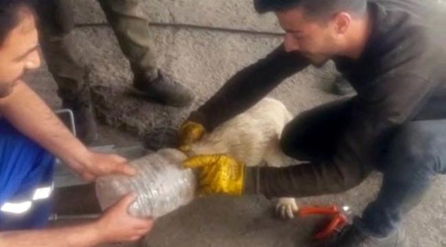 Ardahan'da bidona sıkışan köpek için sanayi işçileri seferber oldu