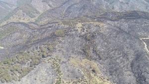 Pakdemirli: Yangın kontrol altına alındı