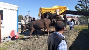 Ardahan Göle'de çalınan hayvanlar Kars'ta yakalandı