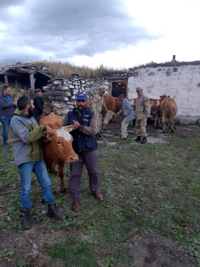 Çalınan hayvanlar Ardahan'da bulundu