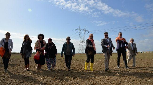Kara kılçık buğdayı İzmir'in ovalarına geri dönüyor