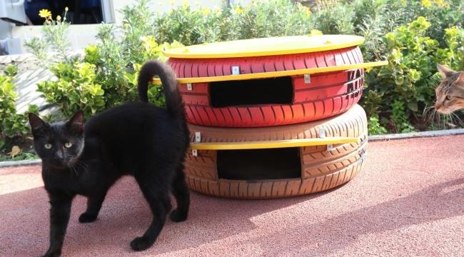 Konak'ın kedileri bu kış üşemeyecek