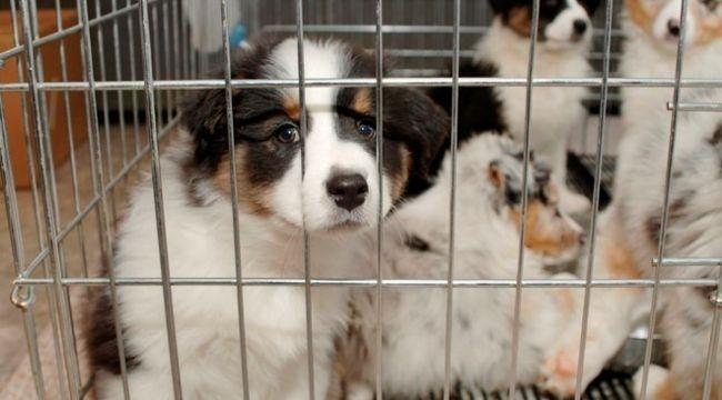 Pet hayvanlarının ülkeye girişi durduruldu