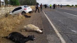 Otomobil koyun sürüsüne daldı şoför yaralı 10 koyun telef oldu