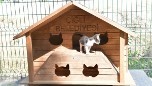 Sokak kedileri yeni evlerine kavuştu