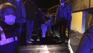 Ardahan'da çalınan 5 büyükbaş hayvan Kars'ta bulundu