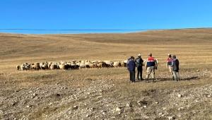 Ardahan'ın Damal ilçesinde kaybolan 132 küçük hayvan drone ile bulundu