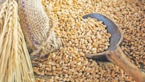 Buğday, arpa ve mısırın gümrük vergisi sıfırlandı