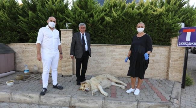 Hayvan Dostu Gündüz Çiftine Başkandan 'İnce' Ziyaret
