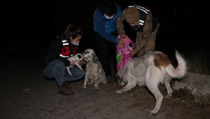 Ardahan Jandarmadan ve Doğa Korumadan Sokak Hayvanlarına Gece Beslemesi