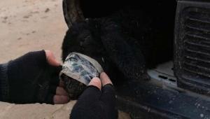 Arabanın far bölümlerine ve yakıt deposuna gizlenmiş 4 kuzu ele geçirildi