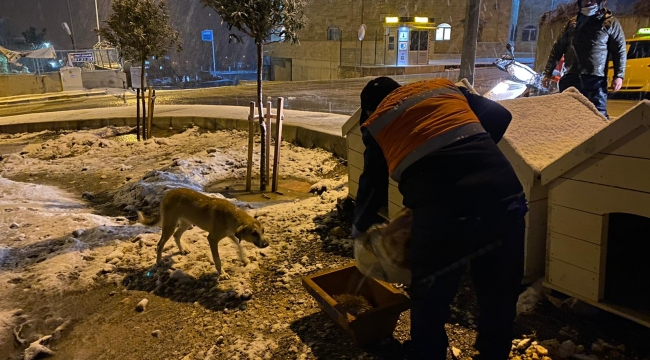 Kar altında kalan can dostlarını Buca Belediyesi unutmadı