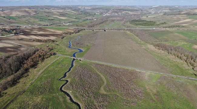 Sazlıdere Barajı'nda sular çekildi, koyunlar otlamaya başladı