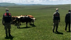 Ardahan'da Kayıp hayvanlar jandarma tarafından bulundu