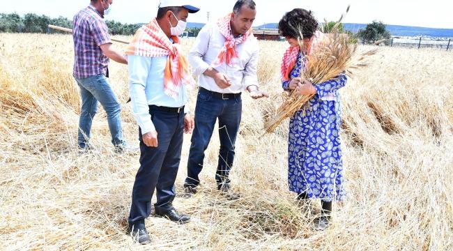Başkan Soyer'in Menderesli üreticilere verdiği karakılçık tohumunun ilk hasadı yapıldı