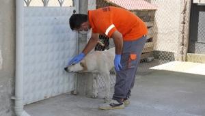 Gaziemir Belediyesi, sokak hayvanlarını pire, kene gibi dış parazitlere karşı korumak için ilaçlama yapıyor.