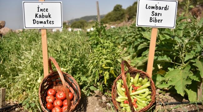 Bornova'da tohumdan fideye yerel üreticiye destek