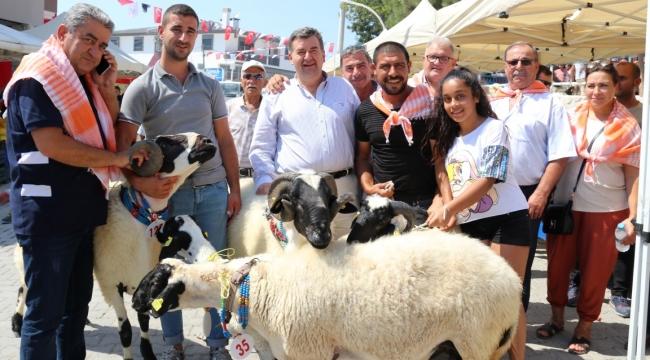 6. Ovacık Tarım ve Sakız Koyunu Festivali başlıyor!